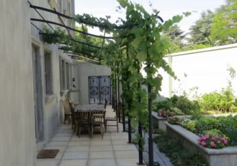<p>Pergola with grape vine</p>