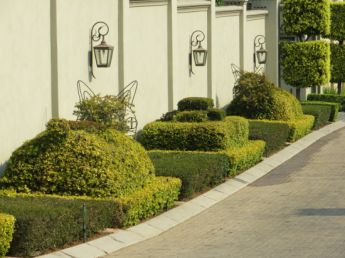 <p>Topiary animals</p>