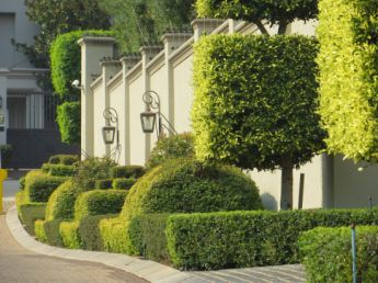 <p>Topiary on pavement</p>
