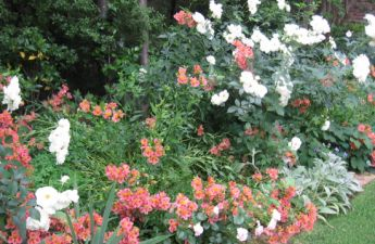 <p>Roses and Alstroemeria</p>