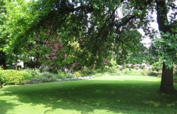 <p>Lawn under the big Oak and water feature to in front of the entrance to screen off the property</p>