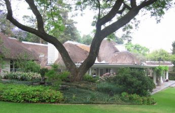 <p>Large tree with rolling lawns</p>