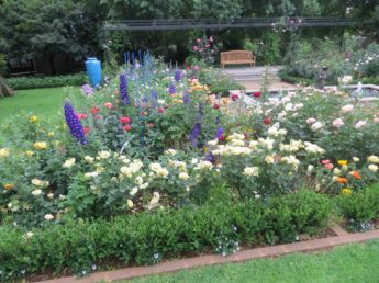 <p>Delphiniums planted amongst the roses</p>