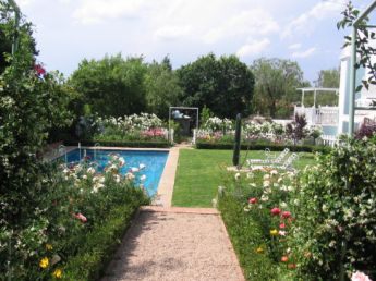 <p>Pool area surrounded by roses</p>