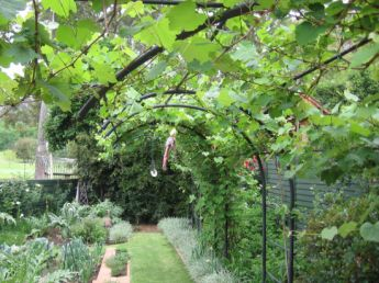 <p>Grape vines on this curved arch</p>