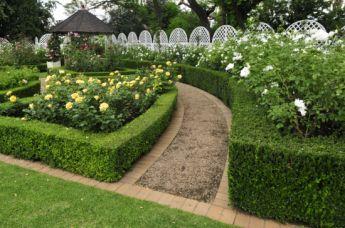 <p>Rose garden</p>