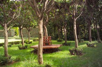 <p>Pleached Vibunum Senensis with circular bench</p>